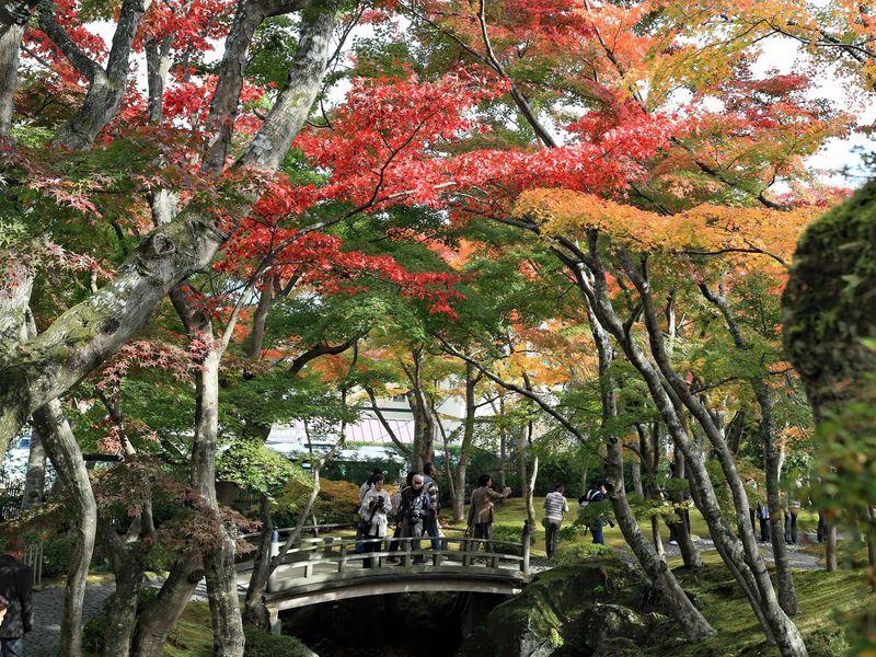 様々な紅葉が!驚きのグラデーションが魅了する