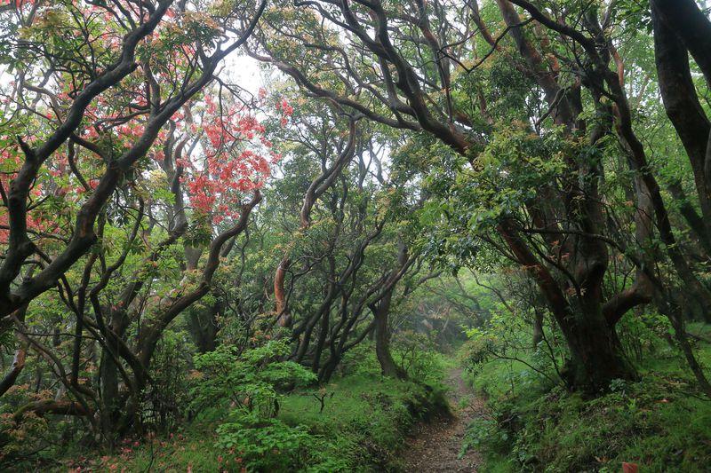 ジブリの世界に紛れ込む!日本百名山!静岡・天城山の圧倒的な自然を歩く