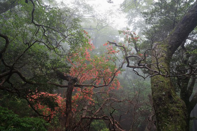 高低差が少なめな初心者向けの天城山周遊ハイキングコース