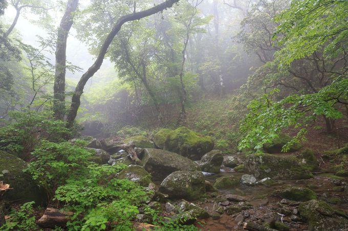 まるでジブリのような森!天城の森を動画で確認!