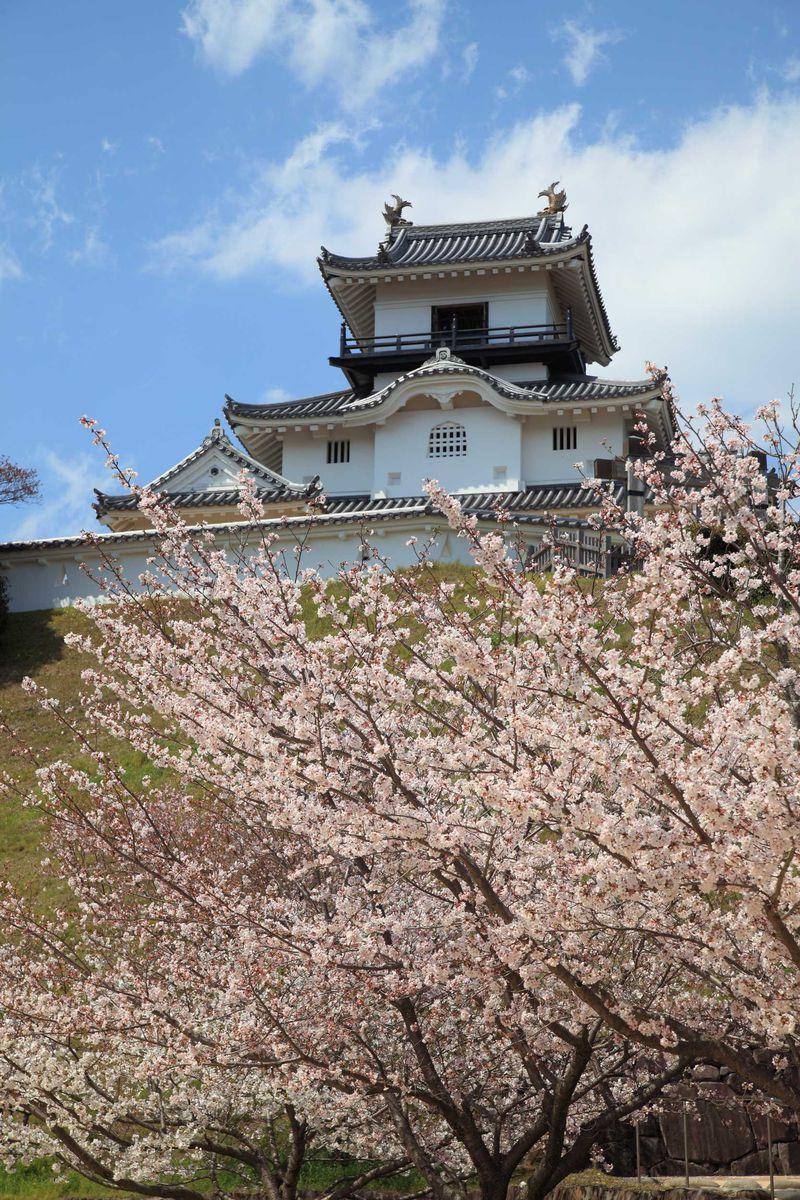 本格木造天守閣として復元。桜も美しい東海の名城・掛川城