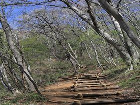 満喫!桐生茶臼山ハイキングで360度のパノラマ