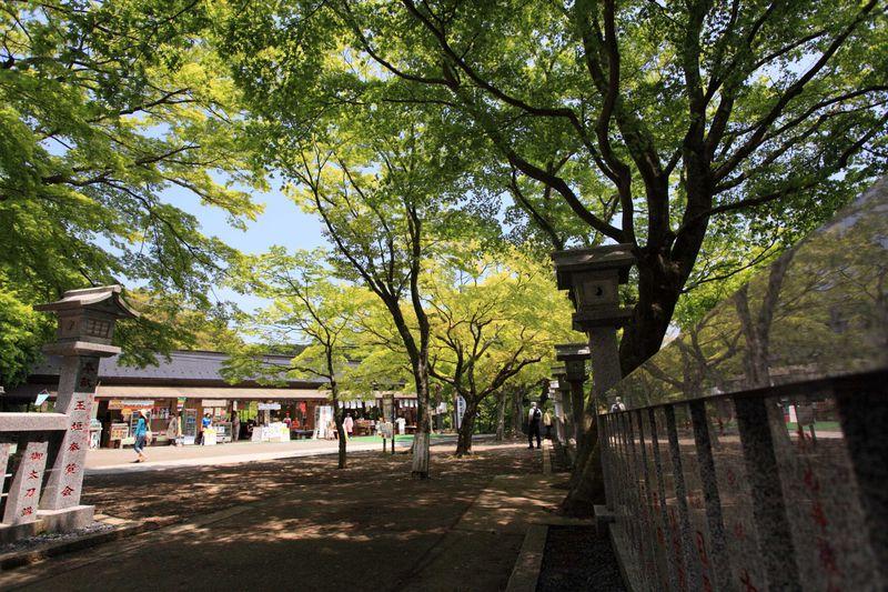 神奈川・丹沢「大山歩き」で爽快トレッキング!
