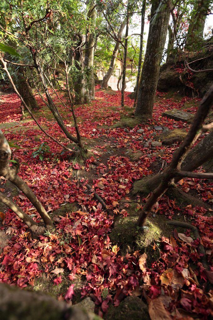 様々な紅葉が楽しめる