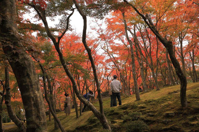 「箱根美術館」だからこその紅葉美!息を飲む美しさにしばし唖然