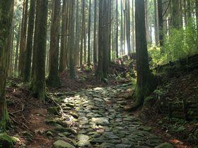 江戸時代の遺構!箱根旧街道をその足で探索