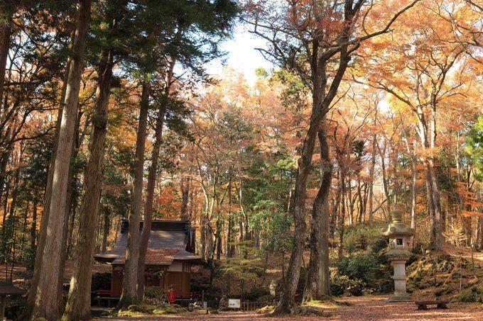 溶岩台地の自然景観が晩秋を彩る