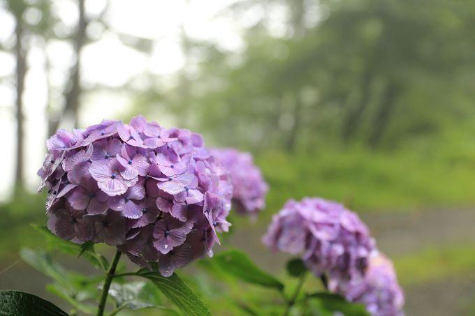 通常は箱根湯本から、アジサイロードと滝巡りは畑宿から