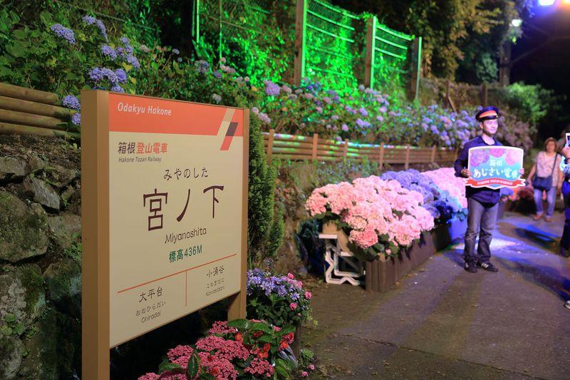 最新車両「アレグラ」も!箱根登山鉄道・夜のあじさい号で箱根の雅を体感