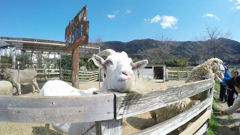 自然と動物が迎えてくれる静岡函南「酪農王国オラッチェ」!