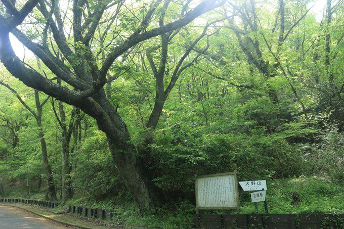 標高723.1mとは思えない大野山の景色のすばらしさをJR谷峨駅からスタート