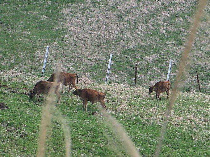 樹木のない山頂付近!放牧された牛や馬を眺めることも