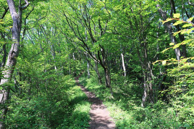 駿河と相模の境目!標高870mの神奈川・矢倉岳ハイキング