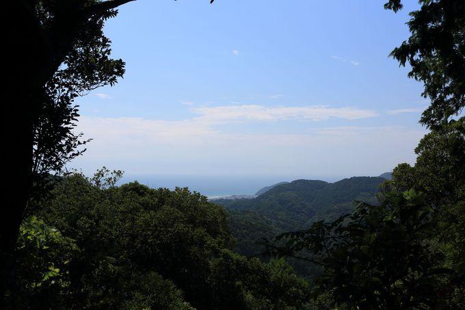 全国でも珍しい「マテバシイ」の純林!圧倒的な密度に新百名山の資質を観る