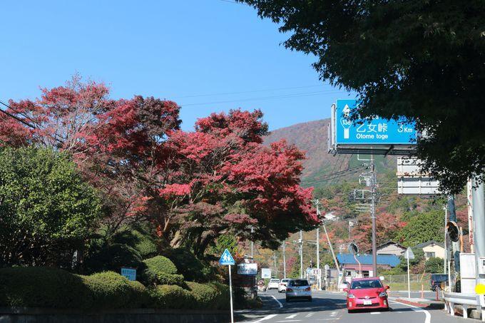 大人気の金時山山頂へは午前中に到着するのがポイント!バスで帰るなら「仙石案内所」バス停からがベスト!