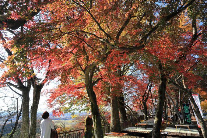 彩深い紅葉が楽しめる謙信平!休憩所としても最適