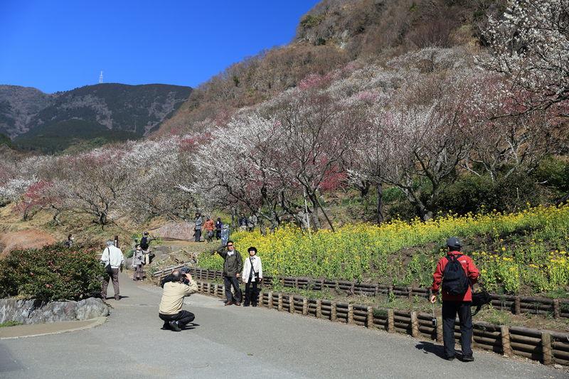 4000本の梅の宴!湯河原・梅の宴で春の息吹を感じとる!