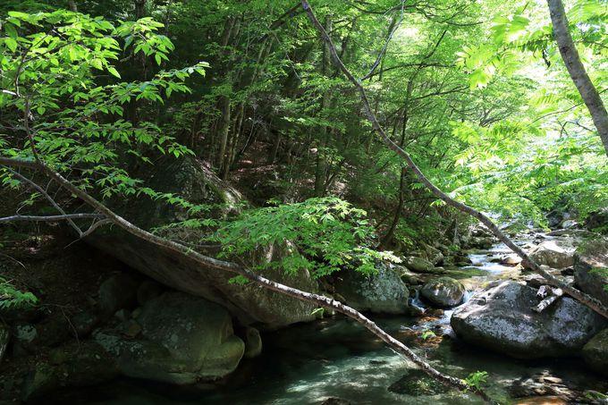 平成の名水百選「本谷川渓谷」。日本屈指のラジウム含有量を誇る「増富温泉」なら「増富の湯」で