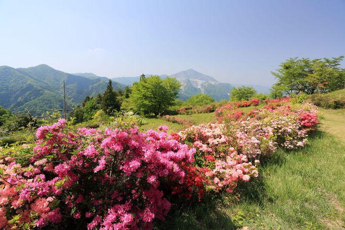 穏やかな風情!山の花道を動画で紹介!