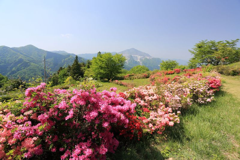 「山の花道」で癒される秩父・丸山!名物うどんも堪能