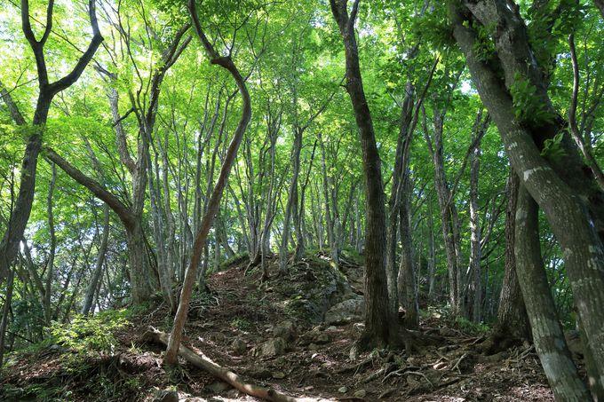名峰「武甲山」が眼前に迫るハイキング!
