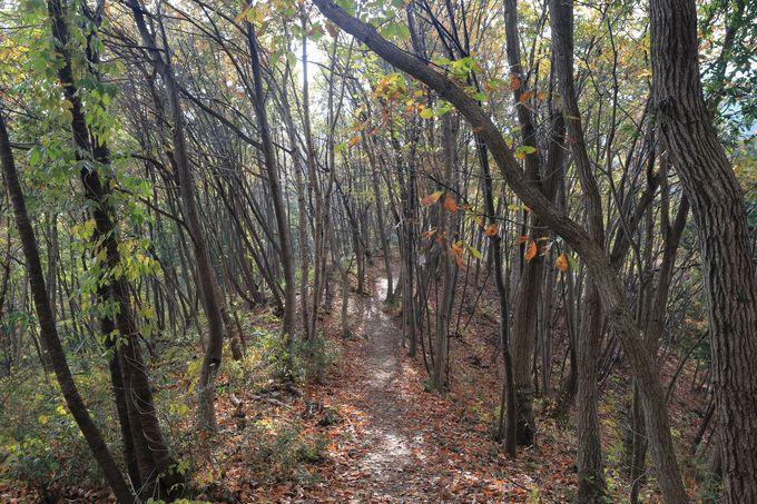 自然を味わえる明確なルート!四季の素晴らしさを誰でも味わえる山歩き