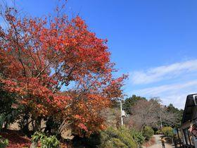 誰でも行ける埼玉・長瀞アルプス!四季折々の季節感をハイキングで