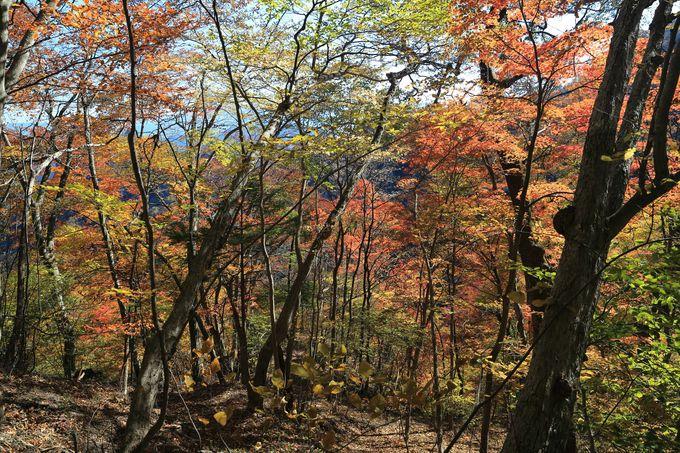妙義山のハイキングは注意が必要!中間道までなら初心者でもOK!