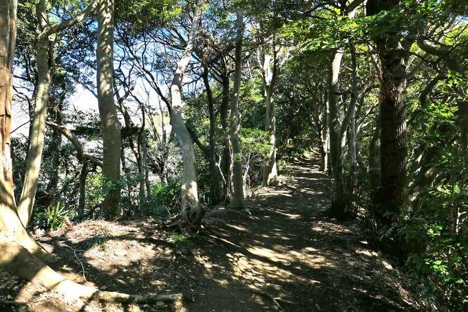 葉山教会の脇から始まるハイキングコースで仙元山山頂へ