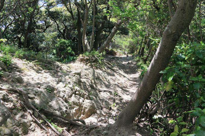 戸根山・ソッカーまでは軽いアップダウンが続く山道