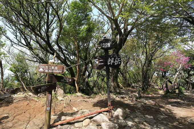 展望は万二郎岳で!端々に伊豆の山々が眺められる