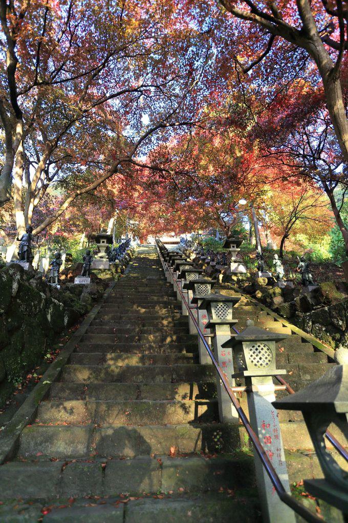 丹沢・大山フリーパスを有効に使って!秋の大山をハイキング