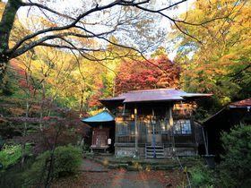 10分で錦秋の秋!神奈川・大山のお手軽紅葉狩りハイキング