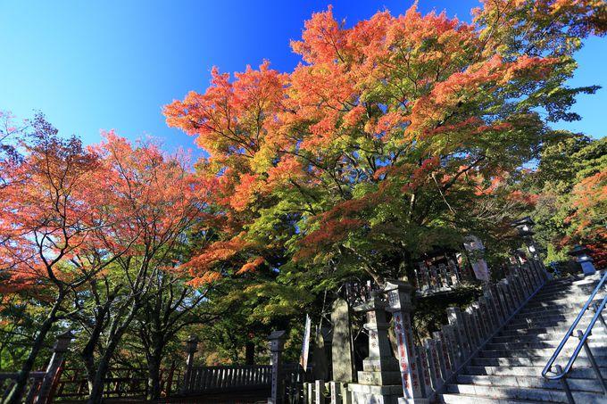 大山阿夫利神社下社は紅葉の宝庫!軽食や休み処としても
