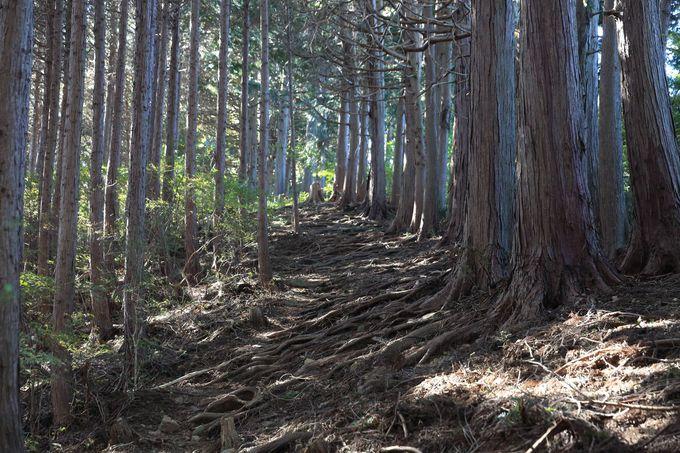 ますは「高取山」を目指し尾根を登りだす