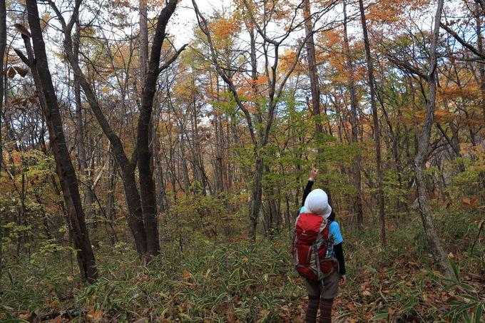 下山は慎重に!紅葉を楽しみながら榛名湖温泉を目指す
