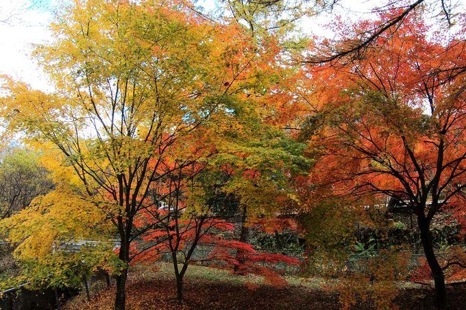 「東京都板橋区立榛名林間学園」横付近の紅葉はぜひとも
