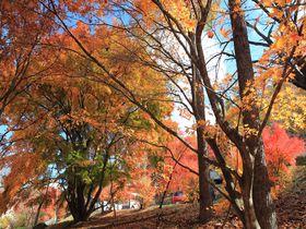 キュンと心に残る美しさ!群馬榛名湖の錦秋の彩りを散策!