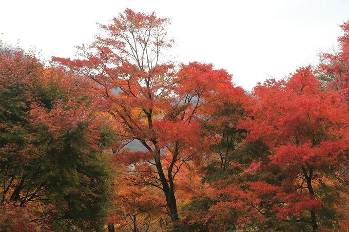「榛名湖浪漫公園」を散策!しみじみと日本の秋を感じさせる場所