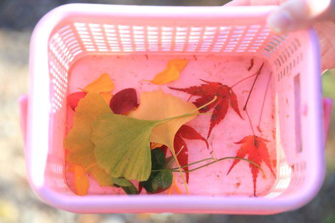 「紙漉き体験」は彩りを添える四季の草花の採取から