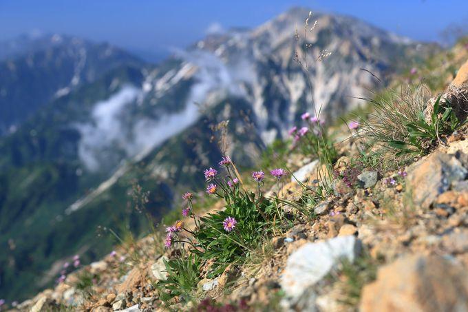 白馬連山を背景に小蓮華山まで