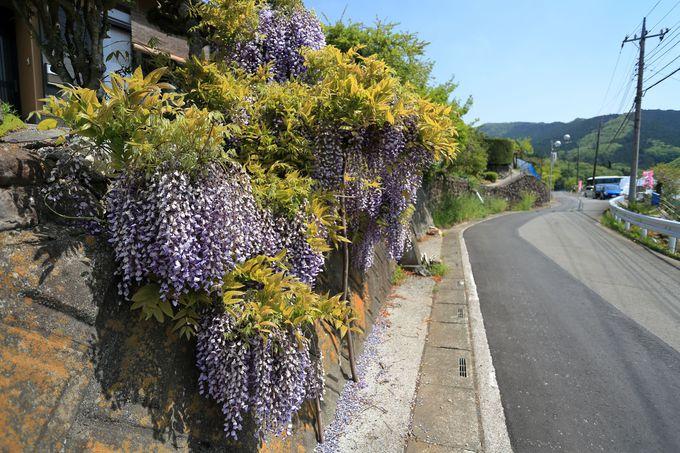 舗装路脇でも多彩な草花が咲き誇る横瀬町