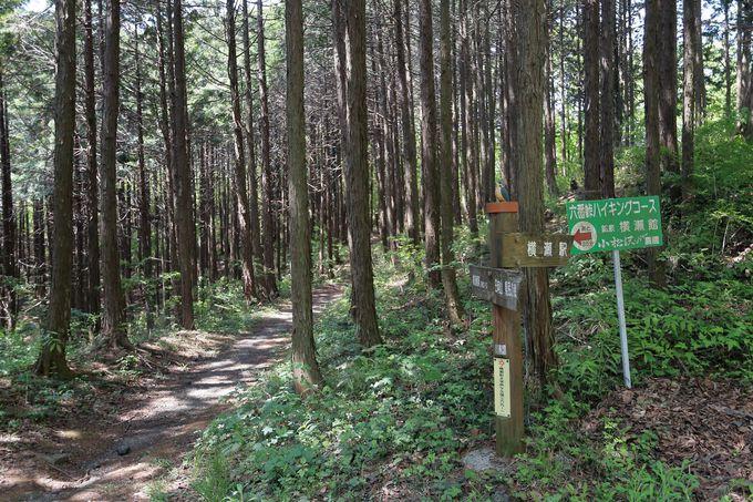 琴平神社に向けて下山!日向山ハイキングを動画で紹介