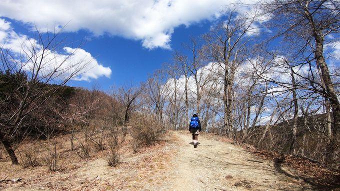 日向山山頂に向けて進み、風の道へ