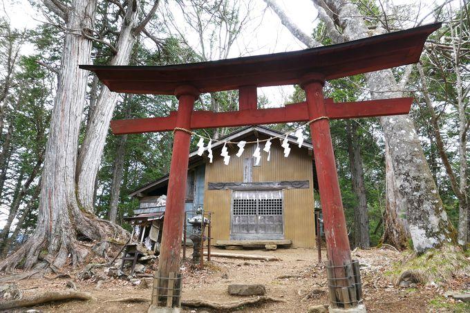 両神神社を経てアカヤシオの中を山頂へ