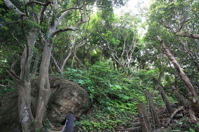 岬の突端に出るルートは、驚きの植生と荒々しい海