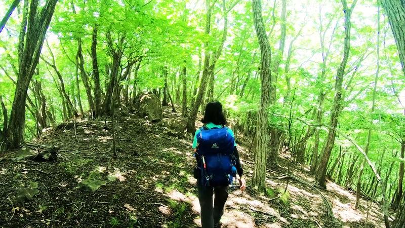 美しい森を行くロングトレイル!夏季の群馬・桐生アルプス
