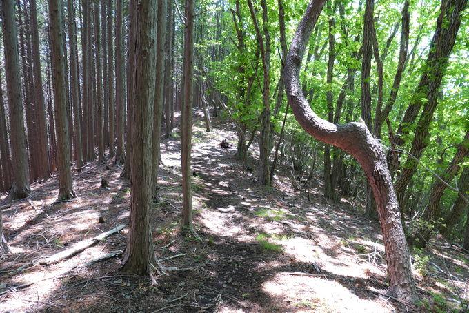 いよいよ吾妻山までの桐生アルプスの始まり