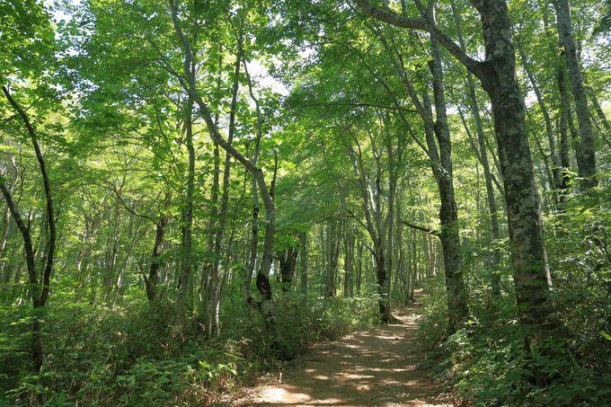 樹林帯を抜け中ノ湯跡へ