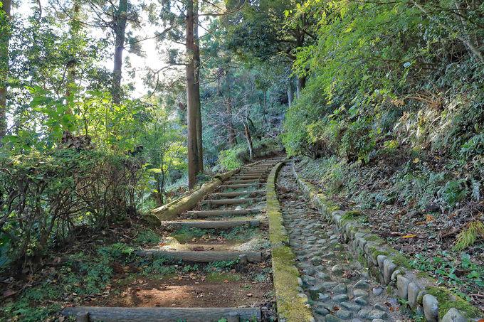 大平山の尾根を周遊する伊東市の「ゆったり湯めまちウォーク」